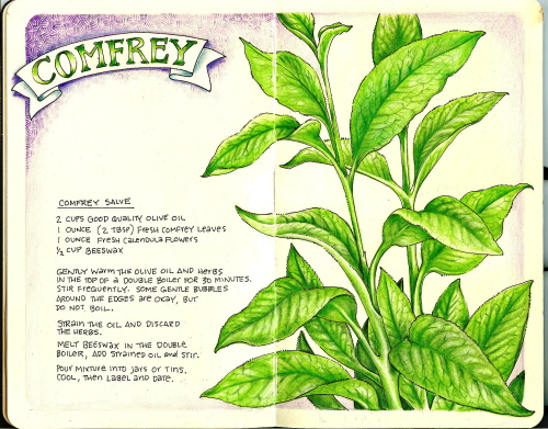 comfrey women Herbal teas and natural, artisanal products grown and made entirely on the island of kauai, hawaii shop for love potion, women's wellness, comfrey & more.