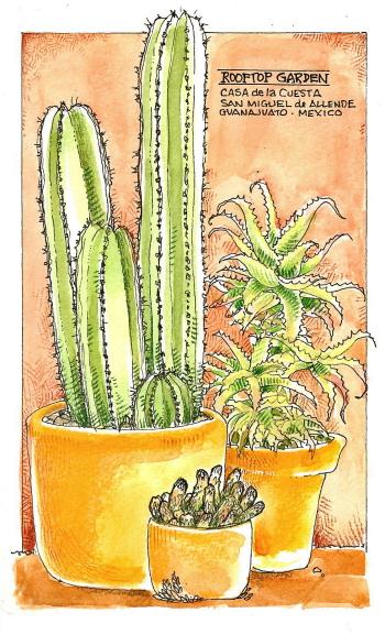 mexico-cactus-garden.jpg