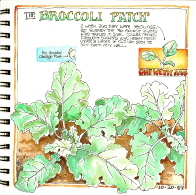 sketchbroccoli.jpg