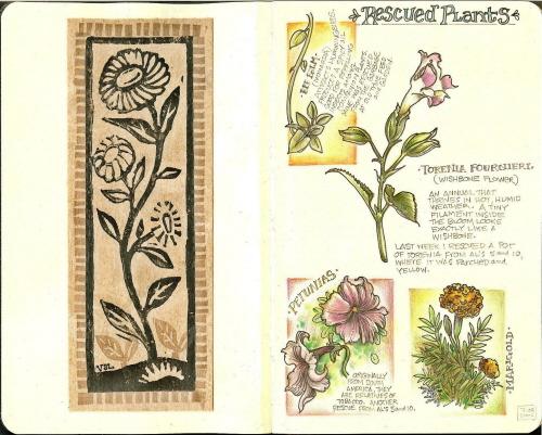 blogmolsekinerescuedplants.jpg