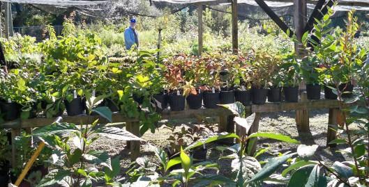 plantsale2