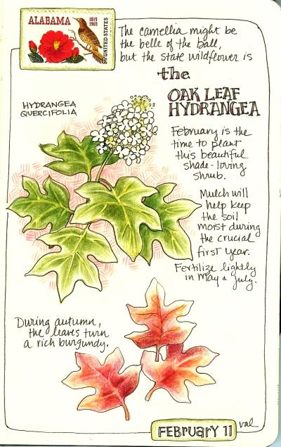 moleskine-oakleafhydrangea