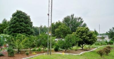 Fruit trees... demonstrating