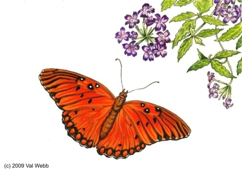 Copy of Gulf-Fritillary-and-Verbena