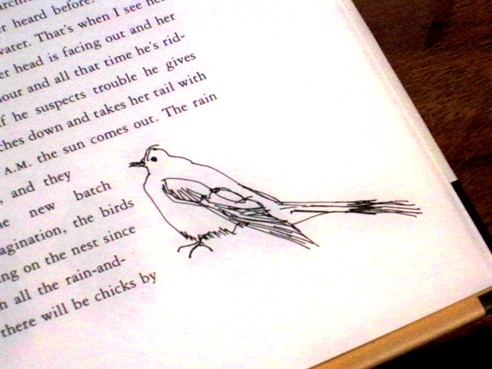 marginbird
