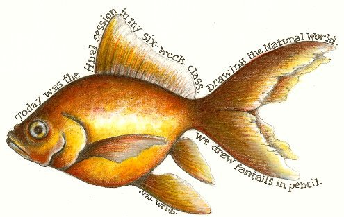 Fantail Goldfish Drawing Hello And Goodbye Valwebbcom