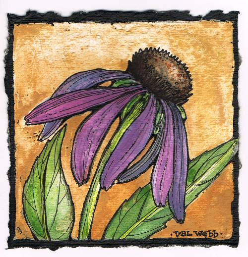 Line Drawing Coneflower : Flowers valwebb