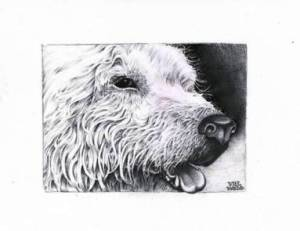 Blog page dog