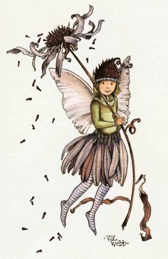 blogpage coneflower fairy