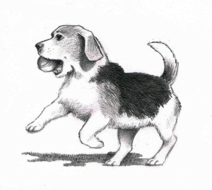 Completed beagle sketch
