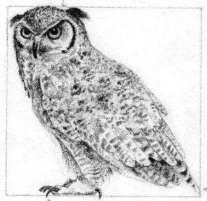 owlsketch