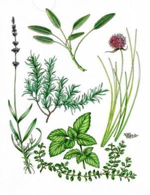 Val Webb - Culinary Herbs (2)