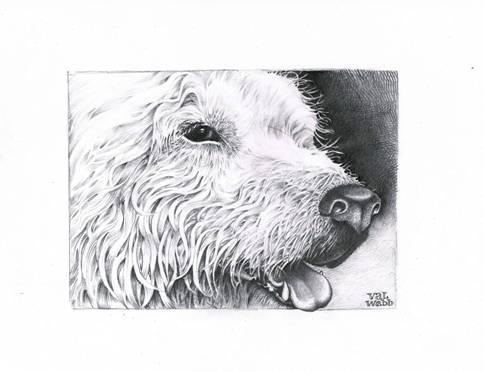 dog fur sketch