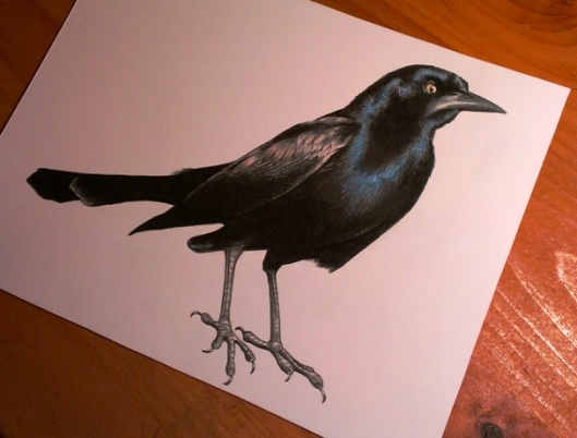 L6 Drawing table grackle