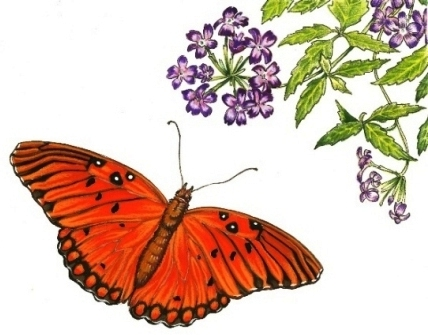 copy-of-gulf-fritillary-and-verbena