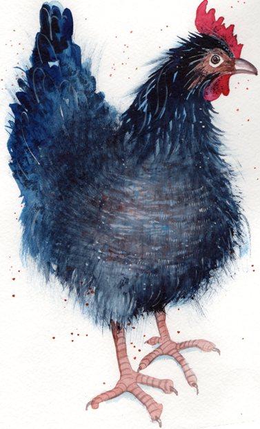 L5 Little Black Hen