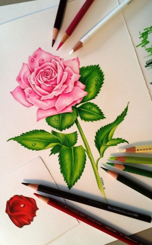 Rose and pencils2