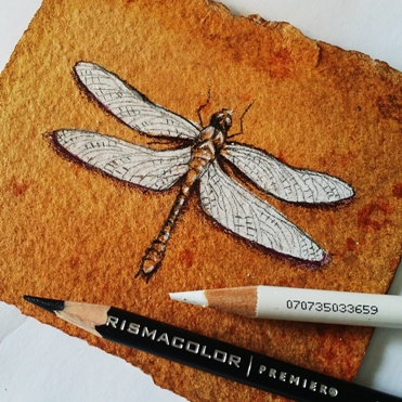 sample sketch dragonfly