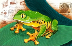 leaf-frog-postcard