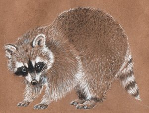 6-29-raccoon-sketch4