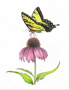 swallowtail-coneflower