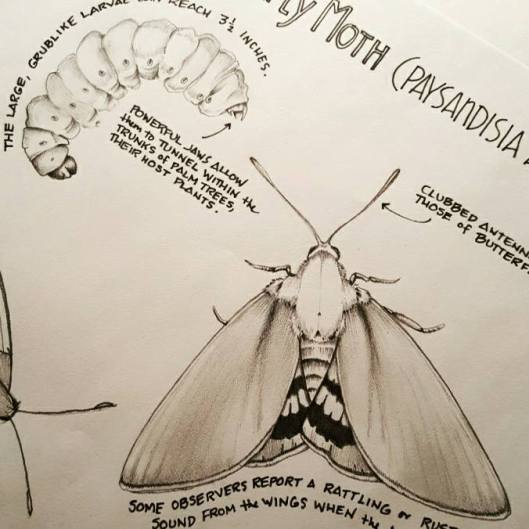 butterfly-moth