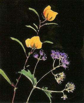 wildflowersgouache