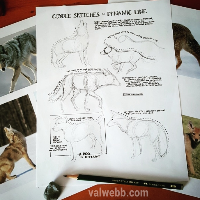 Free printable: Sketching Coyotes | valwebb.com