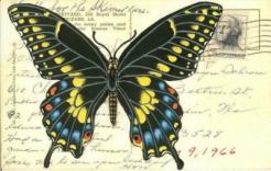 POSTCARD swallowtail