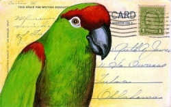 POSTCARD thickbilled parrot