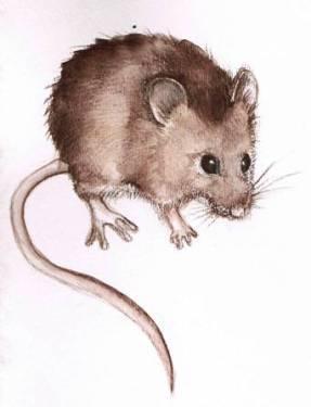 mouse-wc-pencil