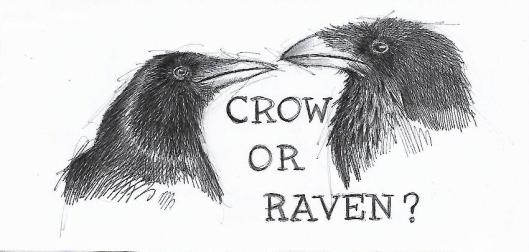 Crow or Raven art - Copy