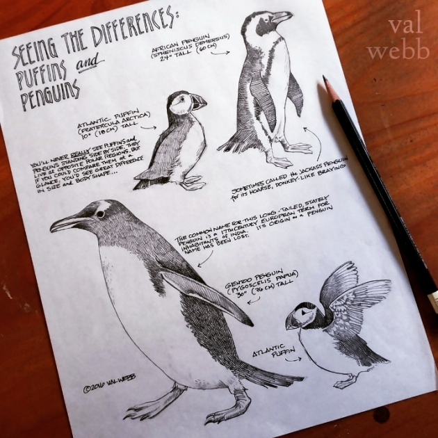 penguins puffins