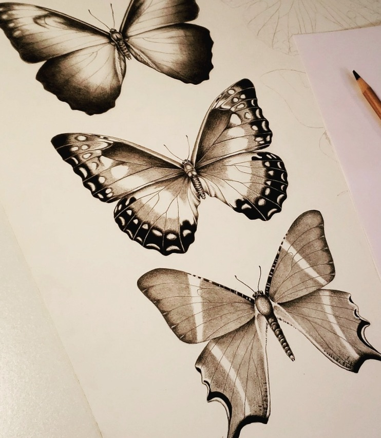 butterflyblog
