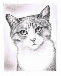 Kitty sketch complete A